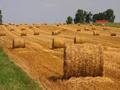 Upotreba biomase od strane farmera u Vojvodini