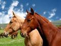 BiH dozvoljen izvoz i uvoz sportskih životinja u EU