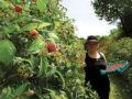 Zemljoradničke zadruge višestruko uvećale dobit