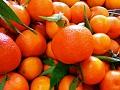Nikad skuplje neretvanske mandarine