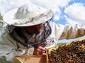 U Živinicama će se graditi prvi pčelarski centar, bit će zaposleno 70 osoba