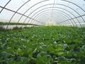 За 11 дена завршува јавниот повик за купување земјоделско земјиште под оранжерии