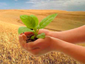 Srpski agrar u prošloj godini u minusu od milijardu dinara