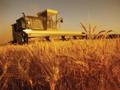 Matijević obrađuje 30.000 hektara, ali tvrdi da je zarada na ovom poslu mala