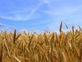 Uskoro prva sredstva poljoprivrednicima iz IPARD fondova