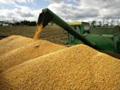 Dogovoren početak izvoza srpske pšenice Egiptu