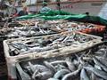 Uvoz ribe neuporedivo veći od izvoza