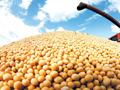 Zeleno svjetlo za GMO soju u RS