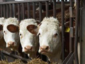 Poticaji animalnoj proizvodnji veći za 3.275.718,15 maraka