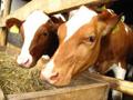 Stočarima 1,2 miliona evra za opremanje farmi