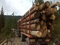 Hercegbosanske šume ispunile plan proizvodnje šumskih drvnih sortimenata