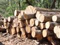Dug koncesionara za šume 5,9 miliona eura
