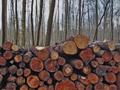 Brković tužio Upravu za šume