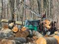 Proizvodnja šumskih sortimenata u BiH prošle godine veća za 3,2 posto