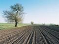 Srpske oranice skuplje i do 20 odsto