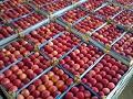 Obezbijeđeno dodatnih 500.000 KM za nabavku ambalaže za jabuke