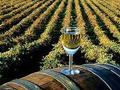 Nedimović: Poseban projekat za unapređenje vinarstva