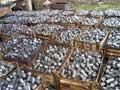 BiH uvozi 17,2 tone uglja od kokosove ljuske