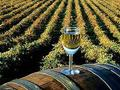 Srbija dobija novi institut za vinogradarstvo i vinarstvo