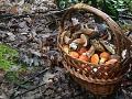 Šumske gljive iz BiH osvojile strane trpeze