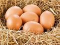 Prva jaja otišla u Hrvatsku